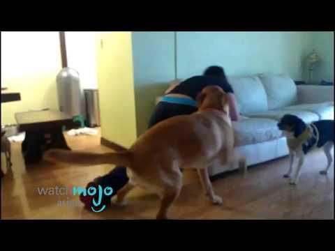 Xxx Mp4 Girl And Her Dog Horny Dog 3gp Sex