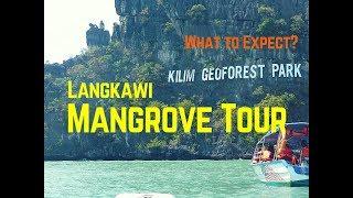Mangrove Tour at Langkawi, Malaysia   Day Trip to Kilim Geoforest Park