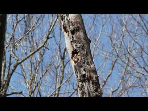 Xxx Mp4 Mr Fluffy The Screech Owl In His Tree Hole 3gp Sex