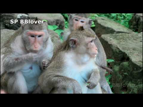 Female Monkey Fighting Male For Not Catch Girl Here