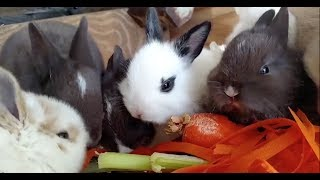 🐰Bunny Breakdown: Are bunnies the right pet for you?