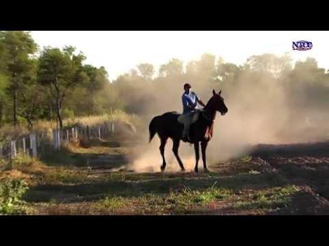 vidas dedicadas a los caballos de carrera NTCC Noticias