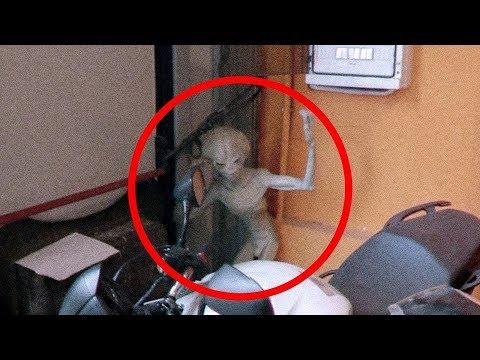 Xxx Mp4 5 Extraterrestrials Caught On Tape Best Alien Videos 3gp Sex