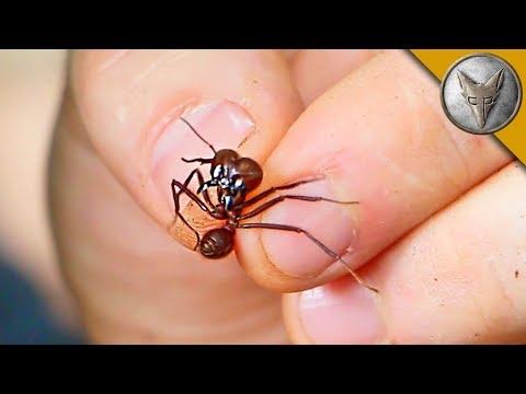 Flesh Ripping Ants