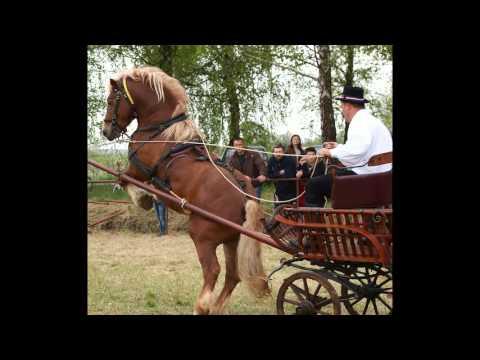 inati se slavonijo i riđan udruga uzgajivača konja HRVATSKI POSAVAC NOVSKA