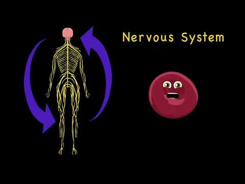 How the Human Body Works for