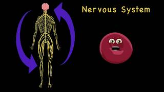 How the Human Body Works for Kids/Learning the Human Body for Children