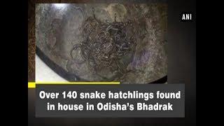 Over 140 snake hatchlings found in house in Odisha's Bhadrak - Odisha News