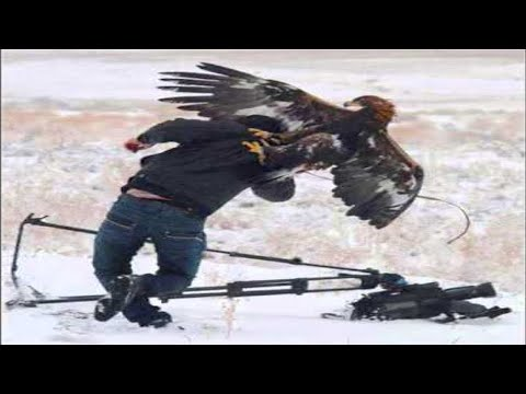 Top 7 Best Eagle Attacks GRIZZLY KANGAROO & MAN HD