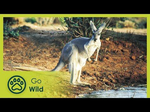 Wildest Australia - The Secrets of Nature