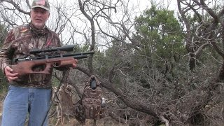 AIRGUN HUNT: the KRAL Bullpup out for Rabbit!