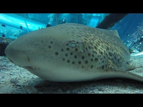Xxx Mp4 Shark In Captivity Gives Virgin Birth 3gp Sex