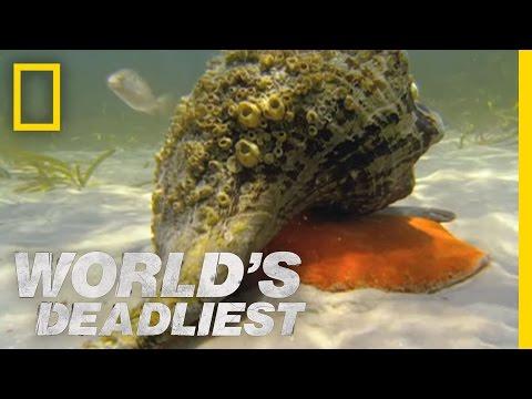 Hermit Crab vs. Conch | World's Deadliest