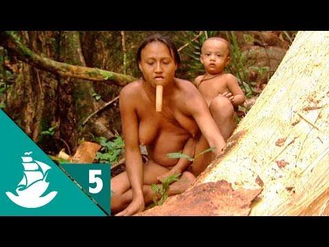Xxx Mp4 Amazonia La Selva Y El Asfalto Parte 5 5 3gp Sex