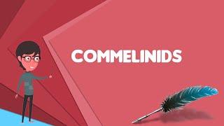 What is Commelinids? Explain Commelinids, Define Commelinids, Meaning of Commelinids