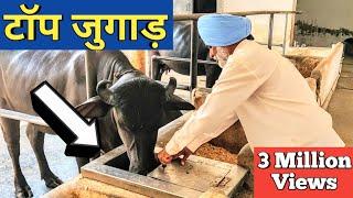किसान ने लगाये ऐसे जुगाड़ सब हैरान |Automatic water bowl|Gobar gas plant|Dairy Farm india