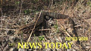 Invasion Of Big, Voracious Lizards Threatens U.S. South: Study | News Today | 08/03/2018 | Dona...