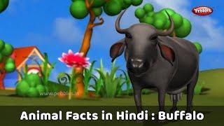Animal Facts in Hindi | Buffalo Facts Hindi | Buffalo Essay in Hindi | Buffalo Song | Buffalo Story