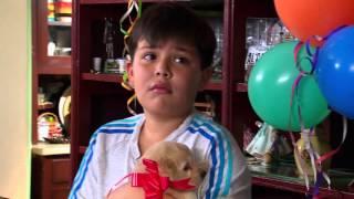 La rosa de Guadalupe |
