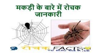 मकड़ी के बारे में रोचक जानकारी | मकड़ी खुद अपने जाल में क्यों नहीं फंसती | Spider Facts