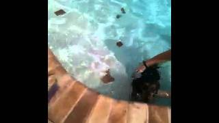 Trooper Swimming