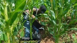 Moustik karismatik Malho affaire de déraillement (Humour Camerounais)