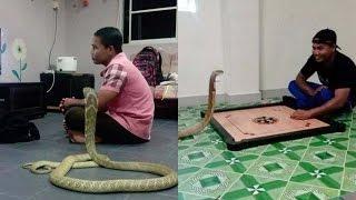 ১০ ফুট লম্বা গোখরা সাপকে বিয়ে করে নেট দুনিয়ায় তোলপাড় । Man Married 10ft Cobra