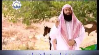 فضل العمرة والحج - الشيخ نبيل العوضي 78 - 13