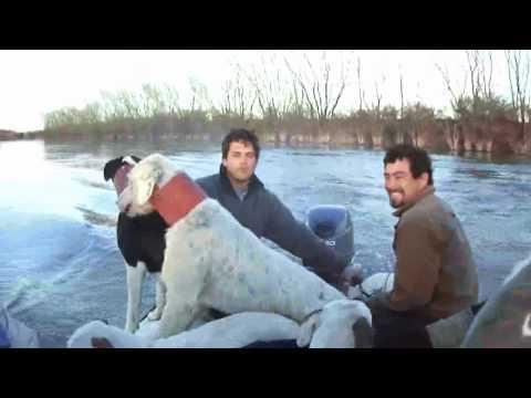 Caza del Jabali con perros y cuchillo costa del Rio Negro