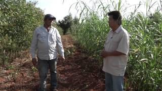 Agricultura Familiar 2 - Iniciativas que deram certo