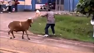 BODE ATACA PESSOAS - VERSÃO STREET FIGHTER