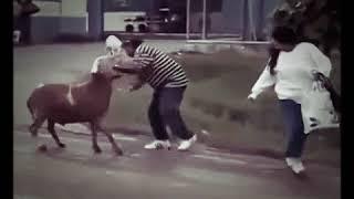 Tu no mete cabra saramanbich