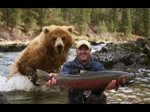 Ataque de Ursos a humanos