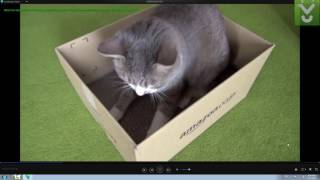 Wondershare Player - Play video in a variety of formats - Download Video Previews