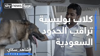 كلاب بوليسية تراقب الحدود السعودية