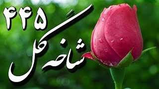Jamal Vafaie, ♥ Iranian Classical Music ♥ جمال وفايى « شاخه گل ۴۴۵ » ♥ جليل شهناز ؛