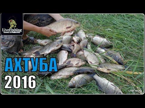 большая рыбалка ахтуба