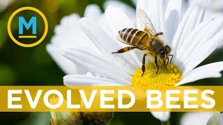 This Canadian beekeeper is trying to breed super bees | Your Morning