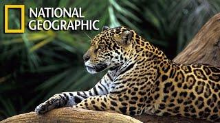 Wild Amazon Documentary HD