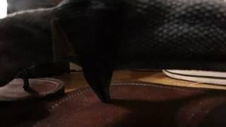VR Macro Flip Flops
