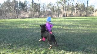 5 year old girl training a dog twice her size and a thousand times stronger than her
