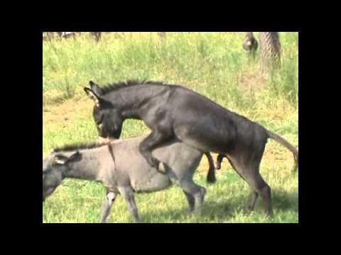 Xxx Mp4 Very Happy Donkey Private 3gp Sex
