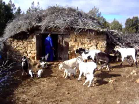 La cabra serrana blanca