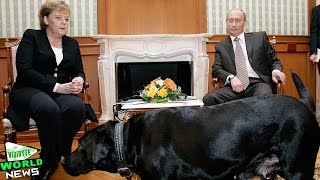 Vladimir Putin: I Didn't Mean to Scare Angela Merkel with Dog
