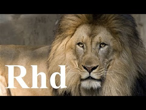 Xxx Mp4 Lions Hunting Pride Hyenas Cheetah Predators Nature 2018 HD Documentary 3gp Sex