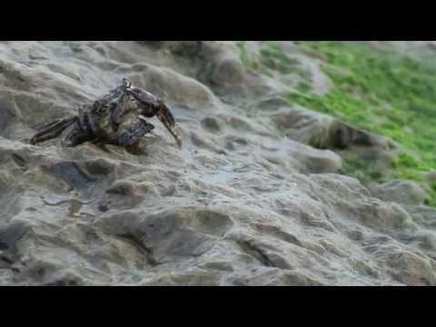 Xxx Mp4 Animals Sex On The Beach Nature 3gp Sex
