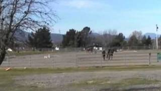 Three People Lunging Horses - Horse Get Loose- Girl Hits Horse with Whip- Rick Gore Horsemanship