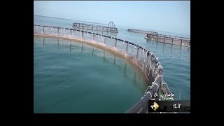Iran Jahad-e Nasr made Fish farming cage manufacturer, Mazandaran ساخت قفس پرورش ماهي