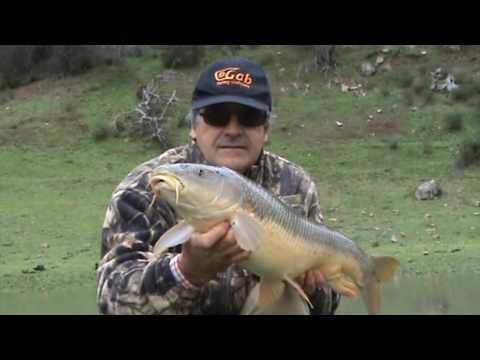 Pesca GRANDES BARBOS con caracol Fishing Great Barbels