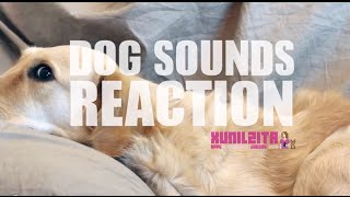 Dog reaction to many sounds / Experimento con sonidos | Experimento